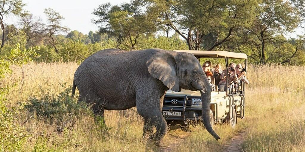 South African Safari incl. Game Drive & Flights   Travelzoo #savemoney #traveldeals #cheapflights #wanderlust #traveling #vacation #deals #airfare #flights #travel #ttot #money
