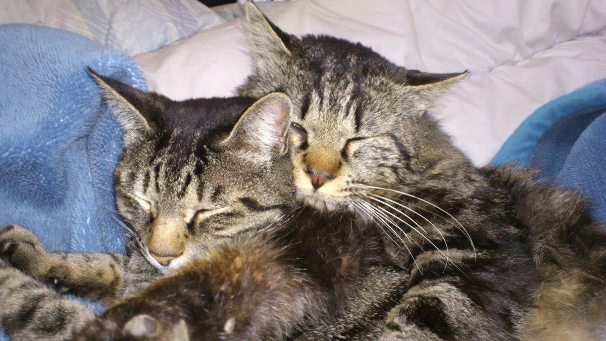 #猫の日pic.twitter.com/kEjPLTS3BB