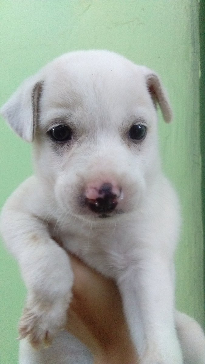 cute cute ni Ice ice baby 💓