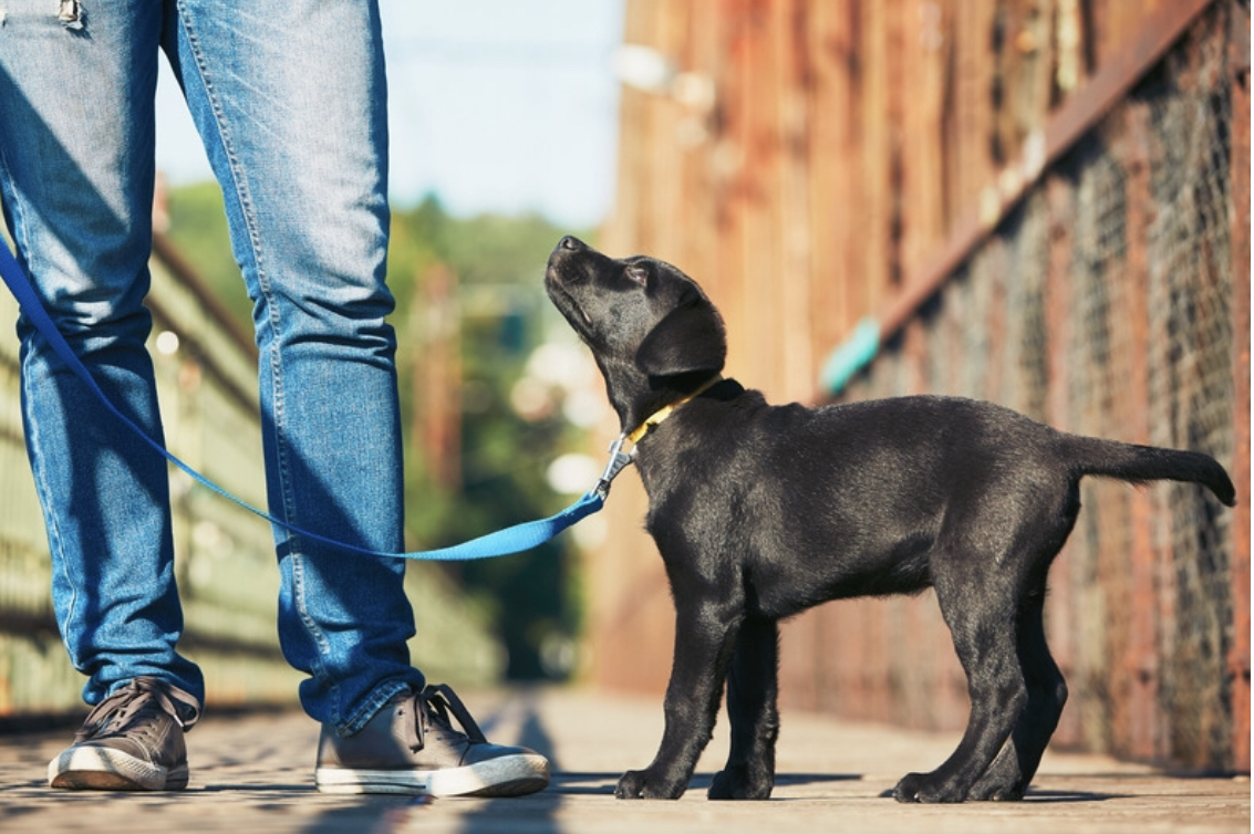 Did you know that today is #walkingthedogday ?  We'd love to see photos of you and your furry friend on a walk to #dukes92   #manchesterbars #castlefield #dogfriendly