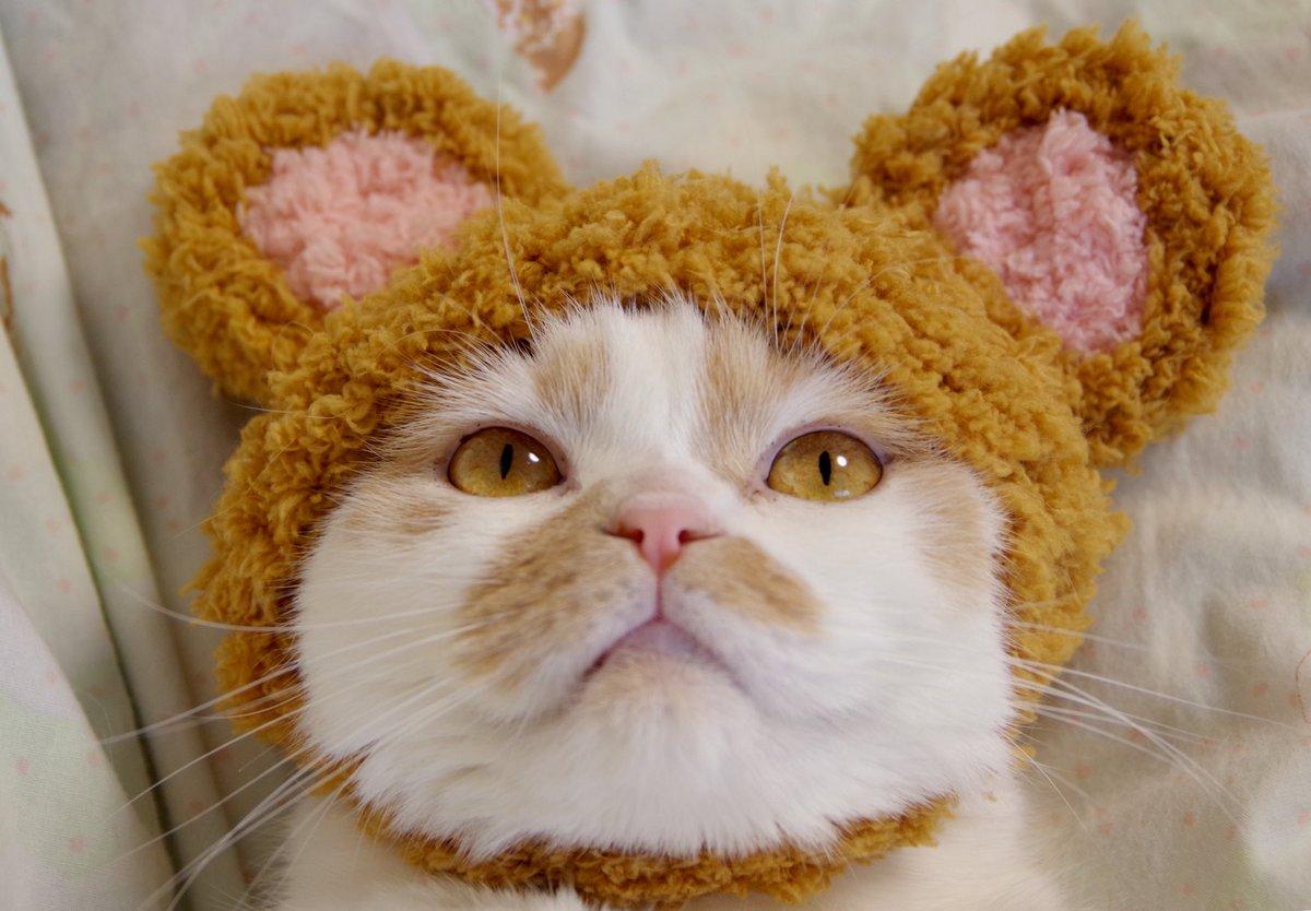 世界中のネコちゃんたち。いつも幸せをたくさんくれてありがとう。みんなに幸あれ🕊令和2年2月22日 #猫の日