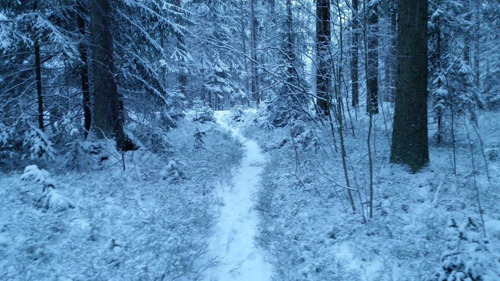 """@an_blogs: Good morning from Finland!  a path in the forest. #Photography #Finland #anblogs #nature #winter """