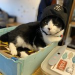 Image for the Tweet beginning: スーパーニャンニャンデー❣️ #猫の日 #nekocafetime