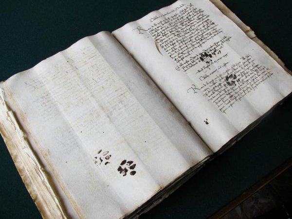 15世紀の写本。書いてるときに、猫が足にインクつけて歩いてしまったようです。