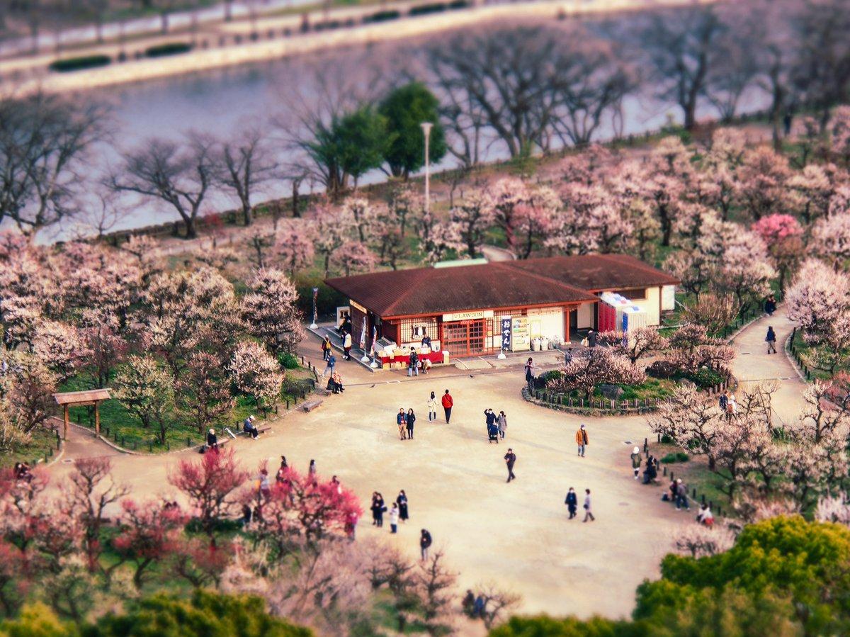 Location:大阪城梅林 あんまり使ってなかったジオラマのアートフィルターで。  #大阪城 #梅林 #ジオラマ風 #lightroommobile #春 #olympus #omdem1 #ミラーレス一眼 #東京カメラ部  #tokyocameraclubpic.twitter.com/j2Bkd7xKmI