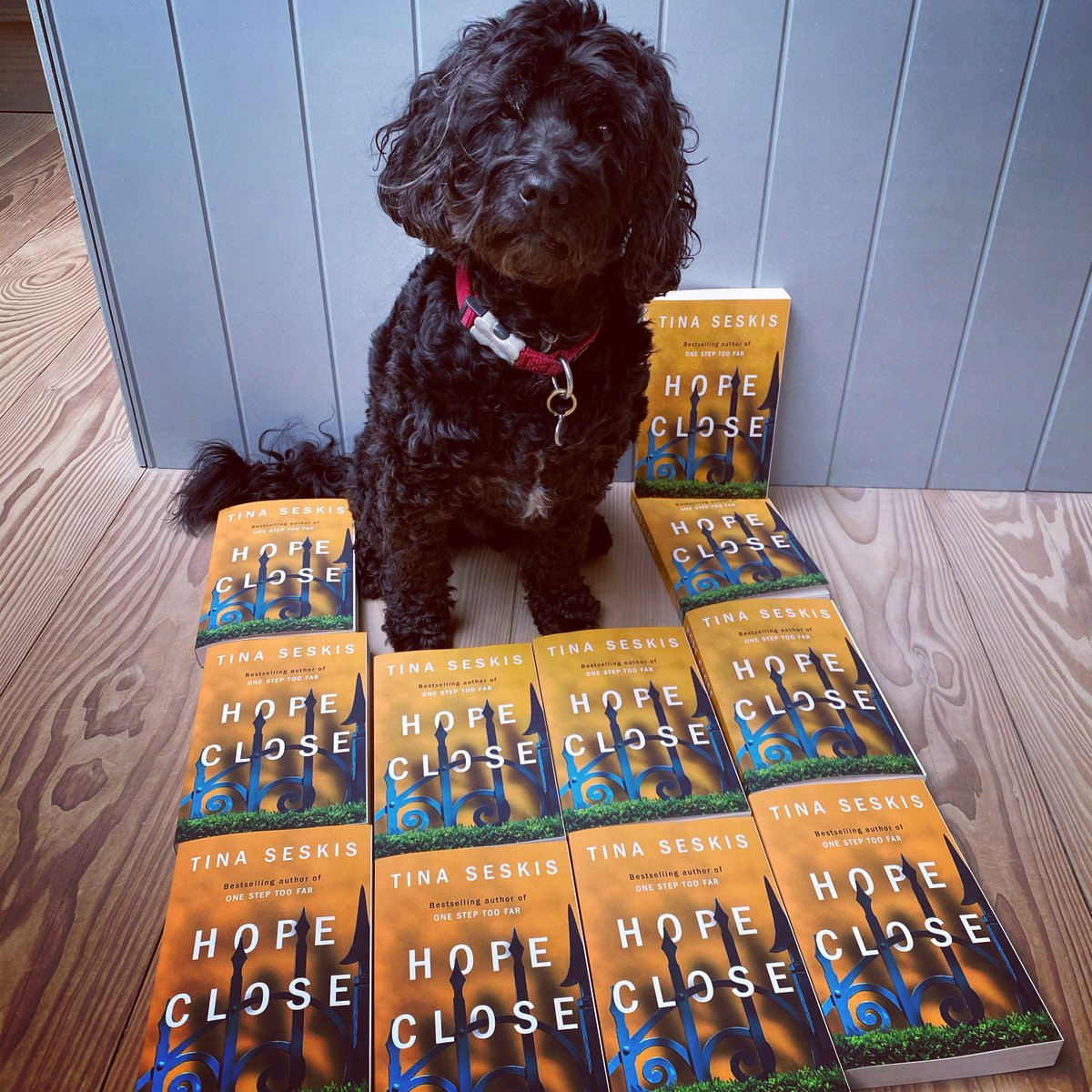 Guess my dog's age!! Winner to the nearest year and/or months gets a signed copy of HOPE CLOSE, as well as a mystery prize. Friends need not apply. xx  #Competition #NewBook #BookWorm #bookblogger #book #dogsoftwitter #dogtraining #n19 #thriller #hope #BeKind #Kindle #prizes