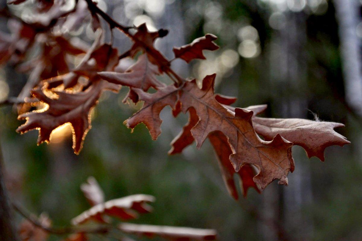 Светлината на Миналото #photobyme #nature #lightpic.twitter.com/WV44dYcDrK