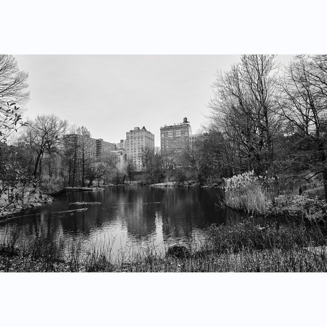 Duck pond in late December  #NYC #nycphotographer #nycphotography #nyclife #nycphoto #citylife #streetphotography #urban #streetdreamsmag #exploretocreate #Fujifilm #fujifilm_us #myfujifilmlegacy #fujifilm_streetphotography #centralpark #duckpond #winter