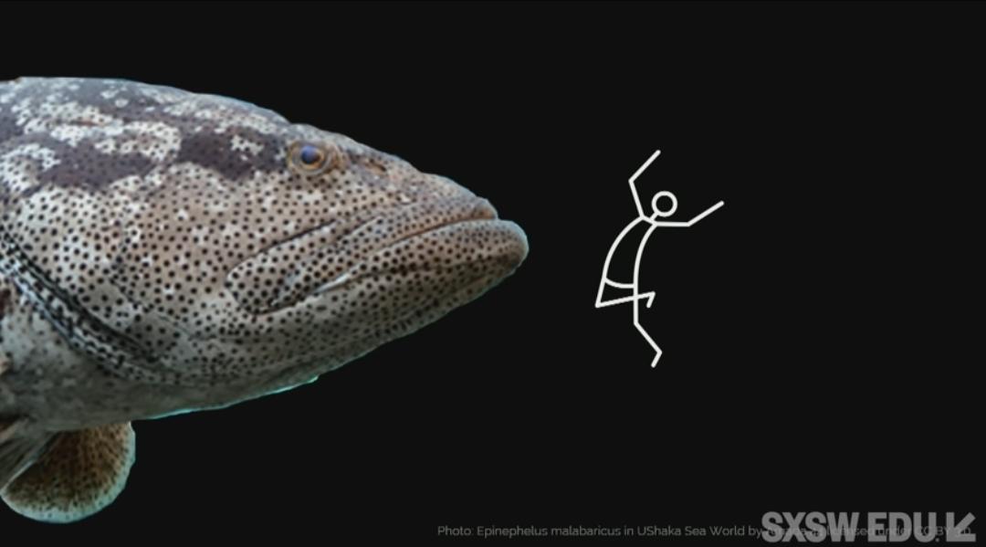 @bbray27 @cultofpedagogy Love @cultofpedagogy , I can never look at fish the same way.... #CrazyPLN