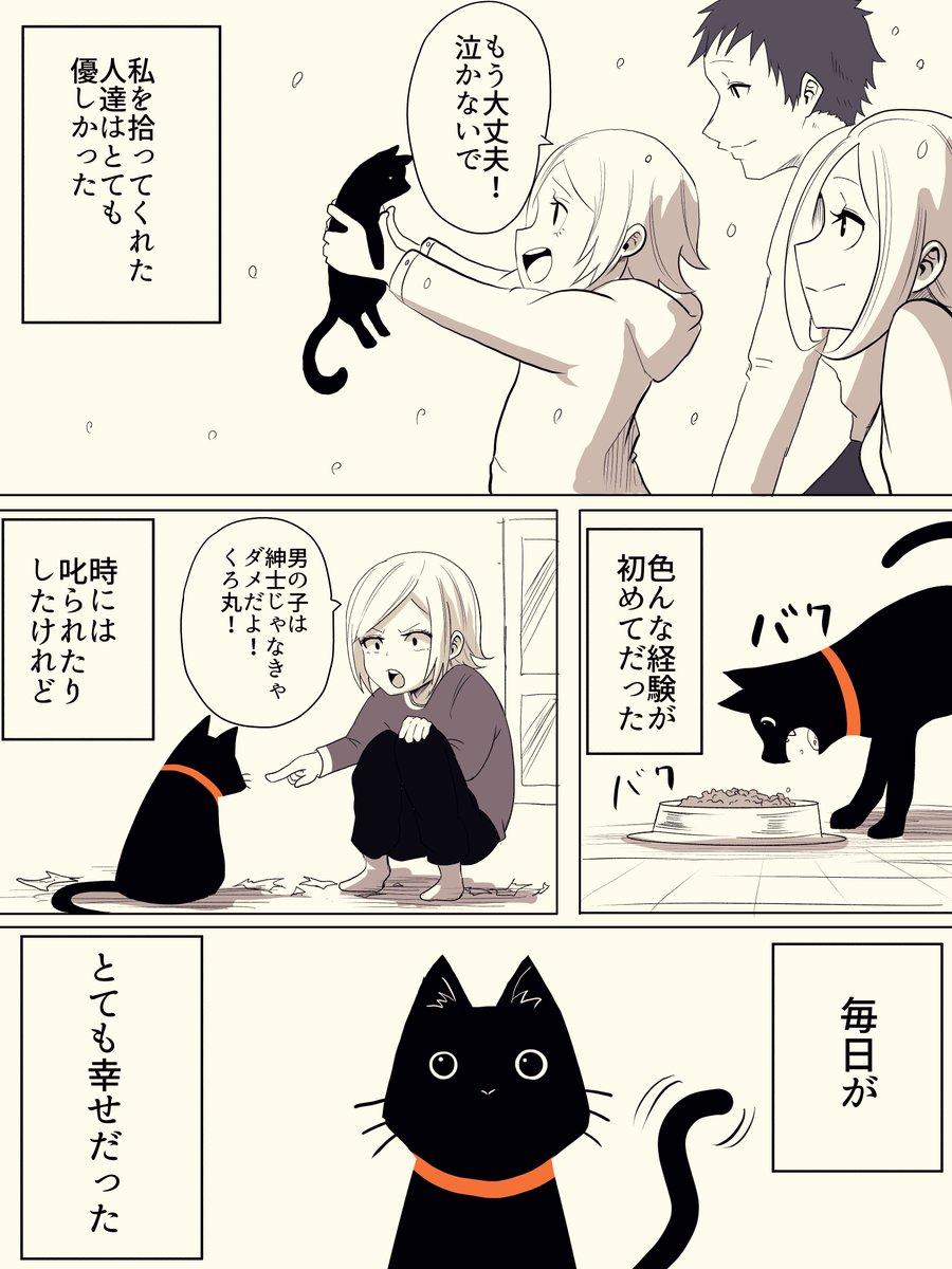 捨て猫が人間から愛情をもらう話#猫の日
