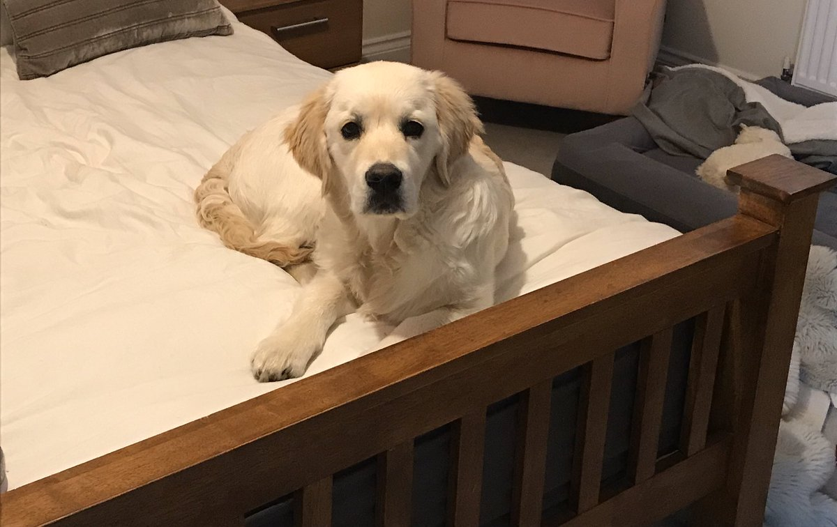 Mum went for a shower. When she came out the baffroom this had happened........this was not where she had left me  #dogsoftwitter #DogsofTwittter #goldenretriever #GoldenRetriever #puppy #puppies<br>http://pic.twitter.com/K4dcbgFtHb