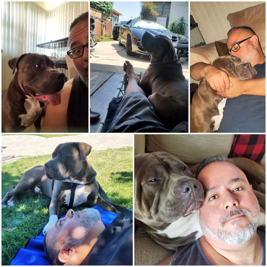 Today is such a pawsome day, it's my dads birthday He's my best friend. Without him seeing me on the news I would never had had my furever home #happybirthday #hessuperoldindogyears #bestdad #bestfriends #loyal #kind #doglover #pitbulls #bullmastiff #Staffordshire #family<br>http://pic.twitter.com/QZuuAiRqii
