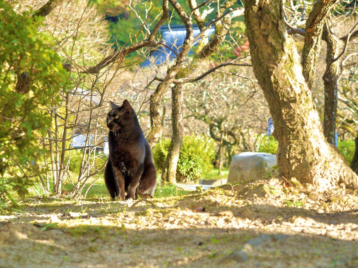 #photo #OLYMPUS #ねこの日  #猫の日