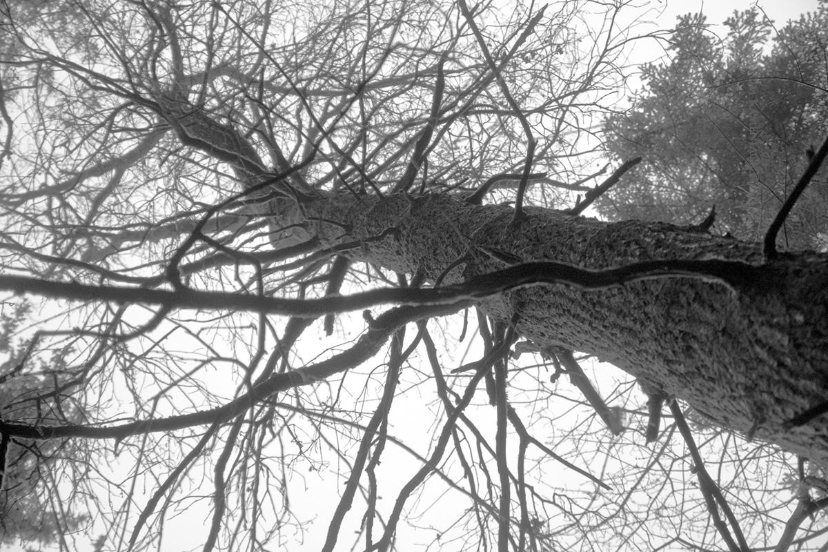 Oak #fotografía #photography #blackandwhitephotography
