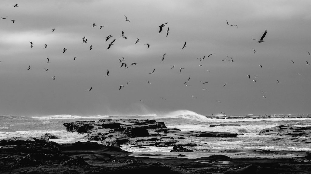 #blackandwhite #photography #birds #oiseaux #monochrome #bnw #bw