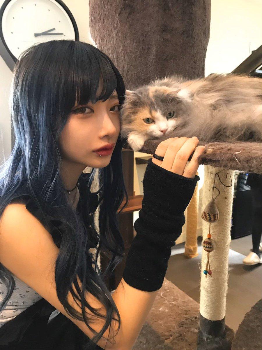 プリキュアみたいな髪色して初めての猫カフェに行ってきた、全然心開かれなかったけど最後開かれて延長しかけた