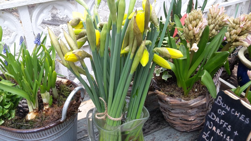 More daffs & narcissi now on the table. Just sold out again. Thank goodness for the dingly dell #anglesey #seasonal #local #chefpic.twitter.com/VlUkSmLUfD