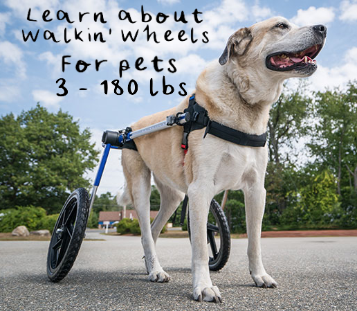 Today is National Walking the Dog Day. Tell us where you're going!#walkthedog #dogpark #handicappedpets #petwheelchair #handicappedpetscanada #walkinpetspic.twitter.com/tKWAGr2LMo