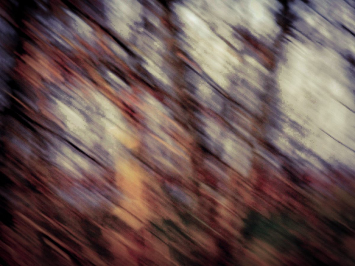 The Movement of  Trees  #Abstractphotography #photography #canonphotographypic.twitter.com/8pv6gqn5ky
