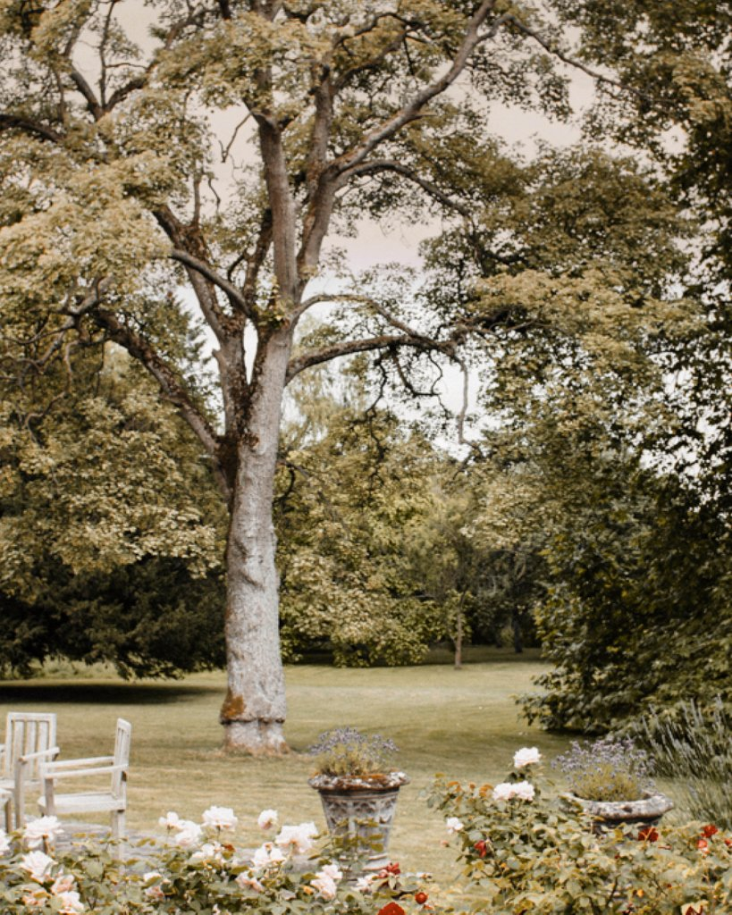 Romantic Gardens at Nether Winchendon House  ✧ Credits to @liam_smith_photography ✧ #NetherWinchendonHouse #NetherWinchendon #BrideToBe #BrideAndGroom #DreamWedding #BuckinghamshireWeddings #BucksWeddings #WeddingDay #WeddingDress #SummerWeddingspic.twitter.com/pynAkR2BSa