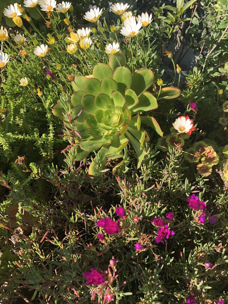 Beautiful like U!  .@Miejse1984 @CJYOON4 @SheilaPierce51 @m0vemebrightly @69mangoman @ChrisNi15810094 @cedarflats @whaler32  @Cerridwensheart @Cray10Angie @webprecision @PJL813 @ajskrhg829 @Jatwiterj @TJStJerome @happygolfwidow @gratefulmemphis #gardens #succulents #nature