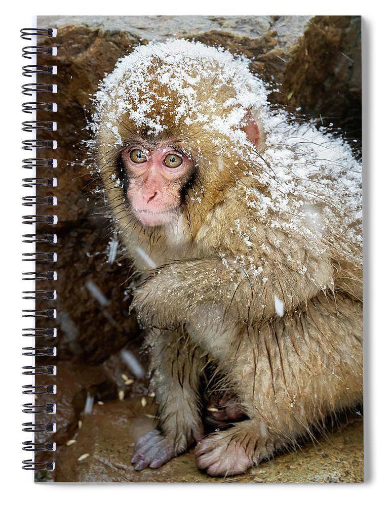 Japanese Snow Monkey IIi #SpiralNotebook  #notebook #journal #journaling #gifts #giftidea #animals #nature #monkey @joancarroll