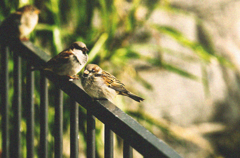 The Birds: 2 poems  #compassion #nature #TheBirds