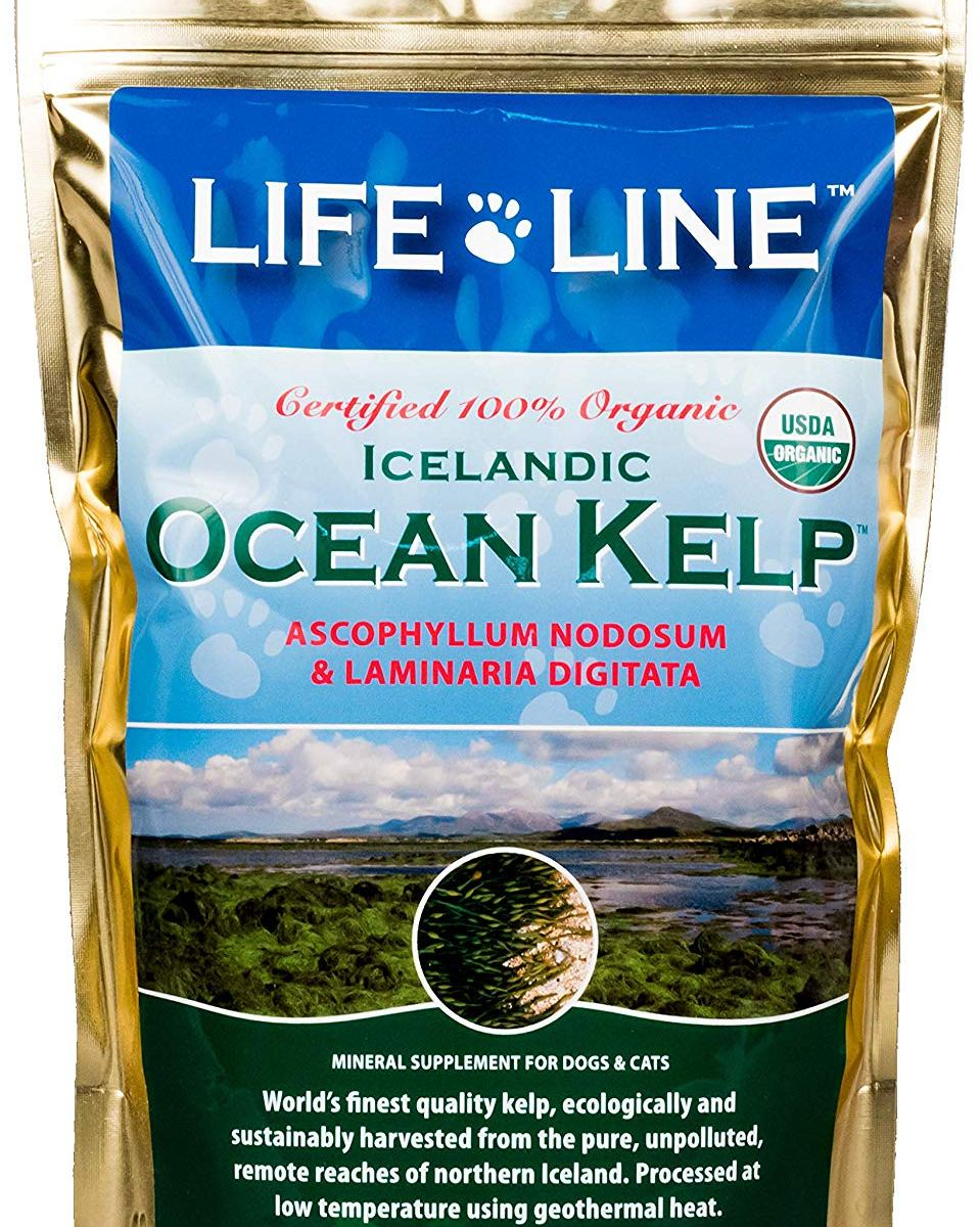 [Life Line Organic Ocean Kelp Dog and Cat Supplement, 1-1/2-Pound] has been posted on https://www.tobem.com/petsazon/life-line-organic-ocean-kelp-dog-and-cat-supplement-1-12-pound/… - Life Line Pet Nutrition Organic Ocean Kelp Supplement for Skin & Coat, Digestion, Teeth & Gums in Dogs & Cats, 1-1/2-Pound :... pic.twitter.com/YovScBNngu
