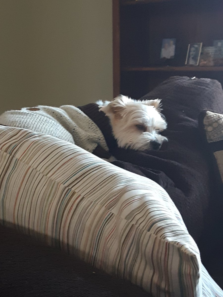 Finally napping after my walk zoomies. #DogsofTwittter <br>http://pic.twitter.com/uSJMG0LDXY