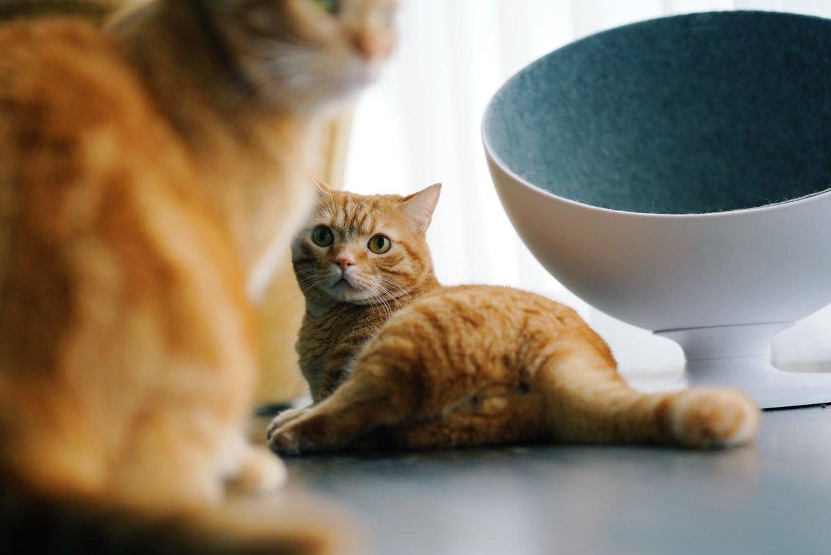 おはようございます🌞#猫の日の次の日