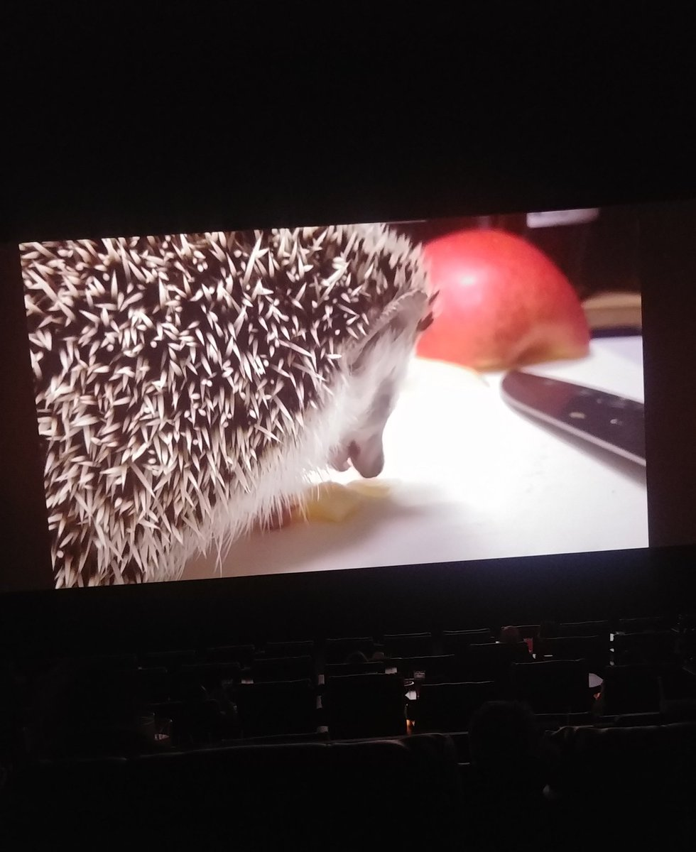 were at a local theater to see sonic and this is what theyre playing instead of previews pic.twitter.com/MFny4Txfht