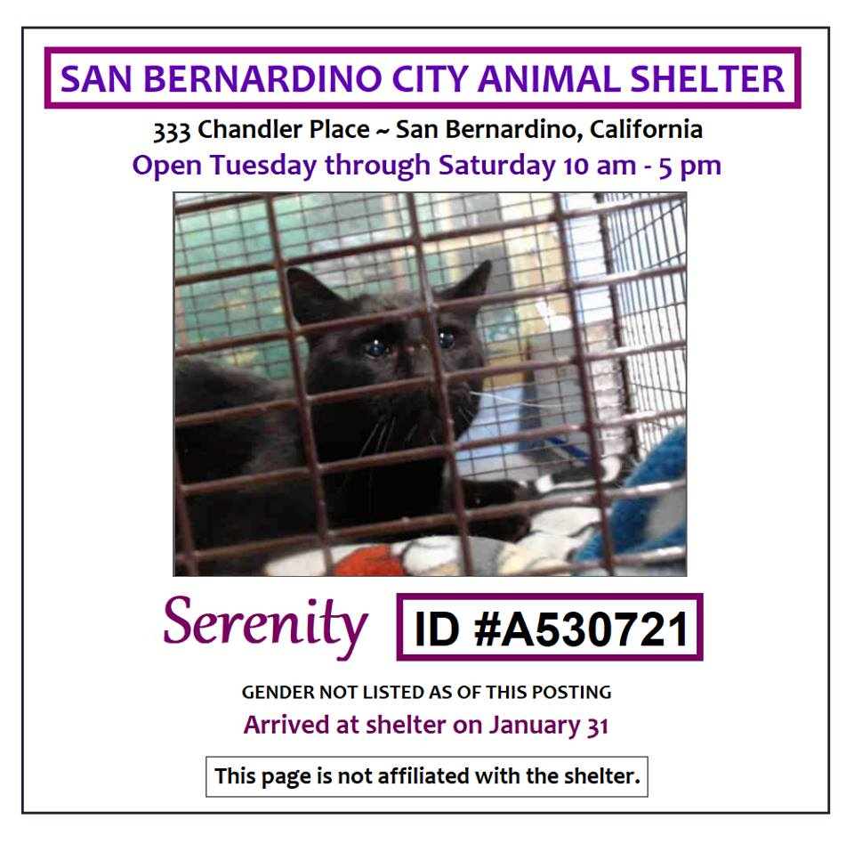 """Beautiful black kitty """"Serenity"""" #a530721 at the #SanBernardinoCA #CityShelter is way past overdue & it's a miracle still alive! Time to save! Adopt! Foster! Pledge for rescue! BEYOND URGENT!"""