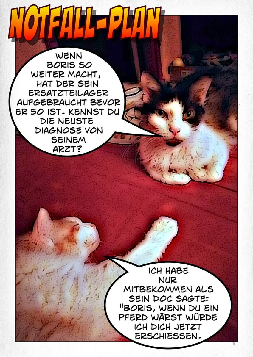 #cat #cats #catfun #catfunny #catcartoon #catlover #catlovers #catart #catofday #catstagram #catsofinstagram #katzenspaß #katzenlustig #katzenleben #katzenliebeofficial #lapermcat #fun #katzen #katze #laperm #katzenaufinstagram #haustiere #katzenliebe #katzenfreunde #katzenfans