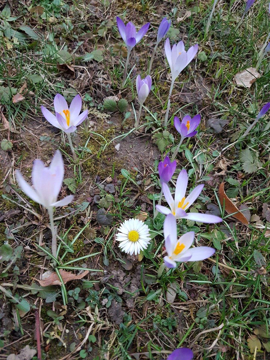 Immer wieder die Vorfreude der Vögel auf den Frühling Die Unbekümmertheit, dass alles so  kommt wie es sein soll Vertrauen, dass jeder Tag seinen Weg findet  Guten Morgen. Ich wünsche euch ein bisschen vom Vertrauen der Vögel und ein kleines Aufblühen ⚘pic.twitter.com/HNCS3Z5Uwa
