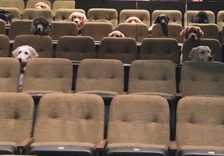 Critics' screening of Cats