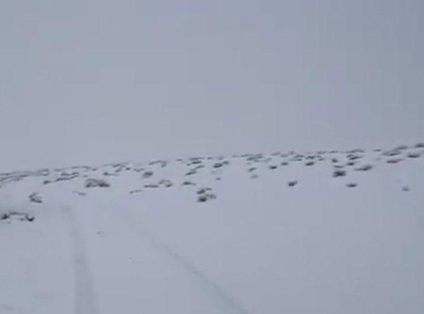 المسند:متوقع سقوط ثلوج خفيفة على مرتفعات اللوز وعلقان والظهر بداية من مساء يوم غد الأثنين..#الثلوج #تبوك #المملكة.