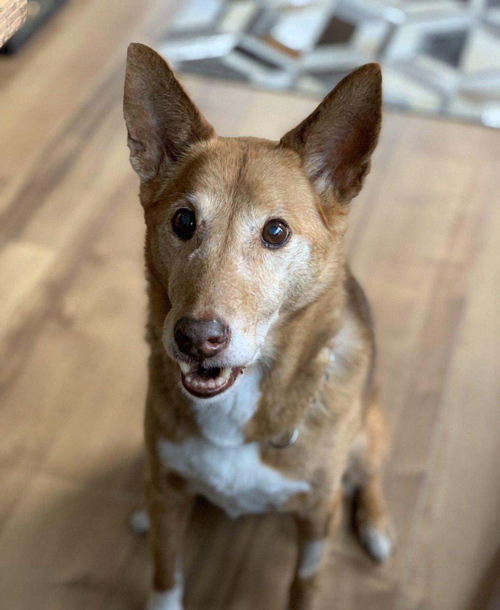 犬のおやつだと思ってたものを、飼い主が食べたときの顔