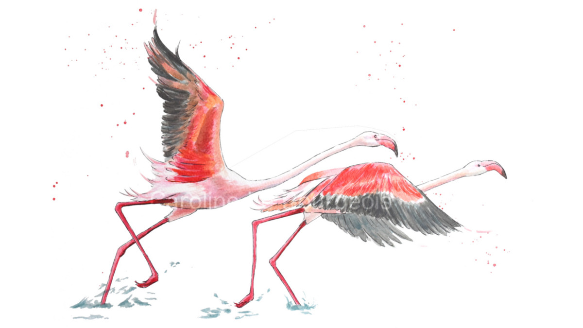 Bonjour Everybody! Who would have guessed that the #flamigos inspiration came from #kenya and they are now flying off to the US! #art #africananimals #animalillustration #animalpainting #wildlife #Pink #pinkanimals #animalart #paintings #paintingoftheday #flight #beautifuldaypic.twitter.com/SDNNsPQTRY