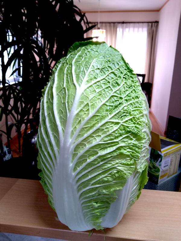 昨日スーパーで白菜が一玉200円だったのですが、あまりにも新鮮で美しく、そして自立するほどにまでデカい(これでも外葉を6枚ほど取ってる)ので記念撮影。今年は暖冬のおかげで野菜も安くて助かります😭白菜一玉買ったらとりあえずサラダにして大量消費~🥳
