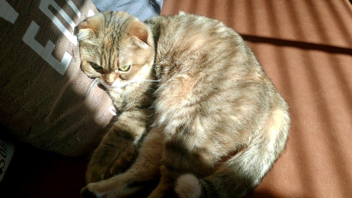 暖かい部屋で気持ちよさそうに寝てて羨ましい #猫のいる生活 #猫のいる暮らし #猫動画 #猫好きさんと繋がりたい #猫好きさんとつながりたい #猫好きな人と繋がりたい #cat #catstagram #CatsOfTwitter
