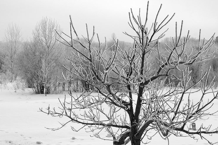 A frosty morning... #blackandwhitephotography #hobbyphotography #photooftheday #minnesotawinter #minnesotaphotography #treespic.twitter.com/ZMKn7v9Lpt