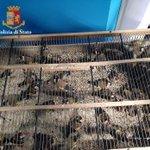 Image for the Tweet beginning: Hanno catturato 45 cardellini, denunciati
