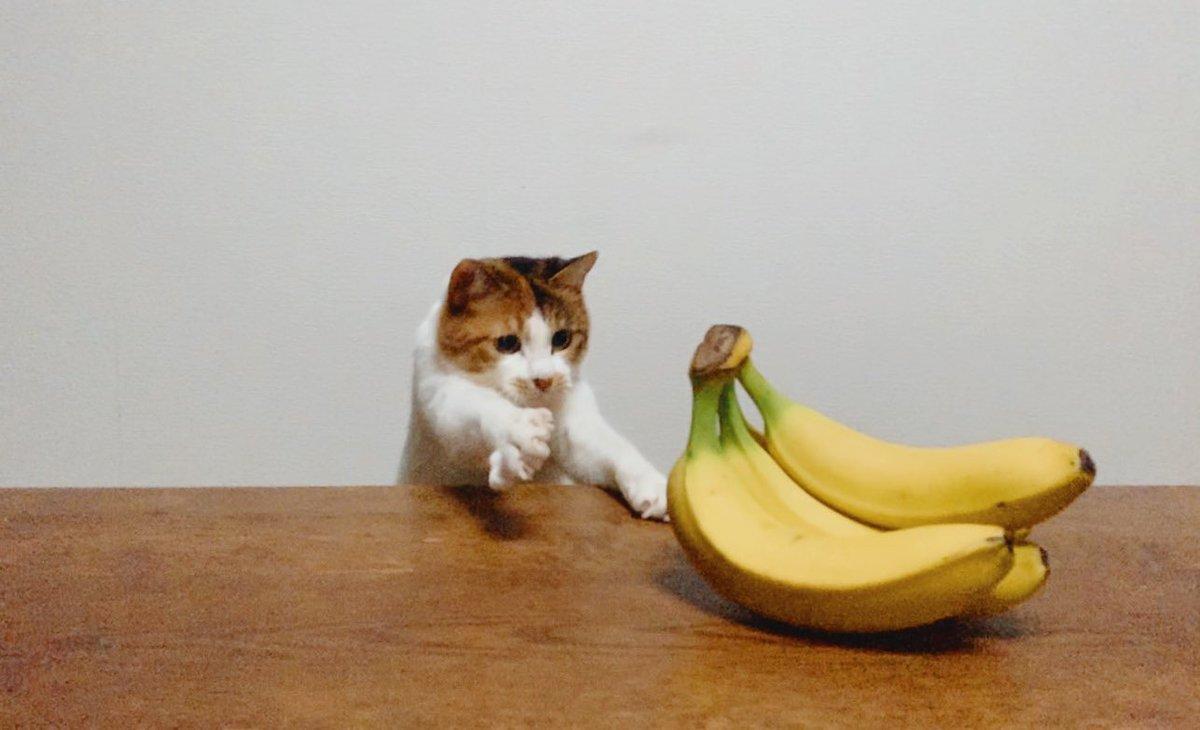 はいはいバナナ