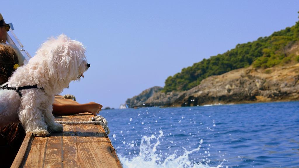 Kann ich meinen Hund mit auf Kreuzfahrt nehmen? Antworten findet Ihr im post.  #FlussreisemitHund #Hund #Hunde #HundeanBord #Hundehotel #KreuzfahrtmitHund #KreuzfahrtmitKatze #ReisenmitHaustieren #kreuzfahrt #kreuzfahrtschiff https://kreuzfahrt4punkt0.de/vierbeiner-an-bord-kreuzfahrt-mit-hund/…pic.twitter.com/0DMPh86qzK