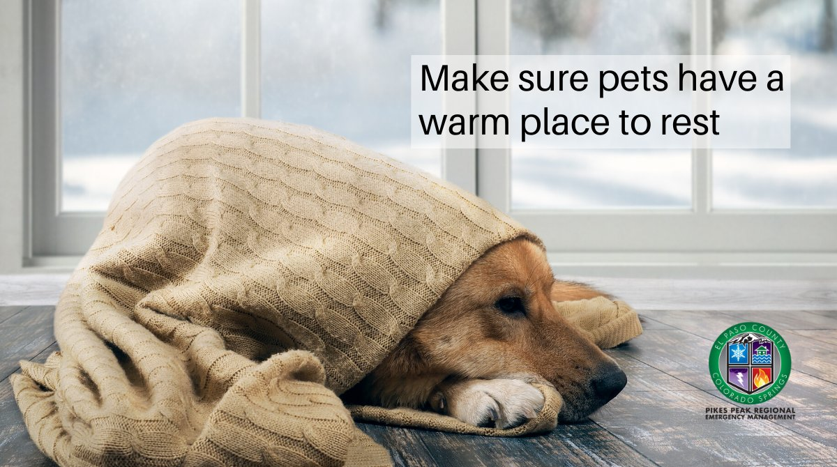 Some dogs LIVE for the snow, but even huskies need to warm up once in a while! Make sure your pets, snow-lovers or not, have a warm, dry place to rest, with plenty of food and water.  #ResolveToBeReady #COSprepared