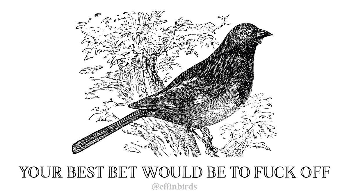 Effin' Birds (@EffinBirds) on Twitter photo 23/02/2020 19:30:50