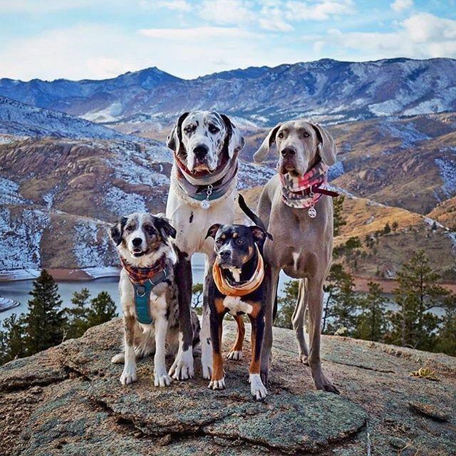 Don't mess with this #dogsquad #coloradolife #coloradodogs #dogsonadventures #dogsinwilderness #traildog #hikingdog : @breckandbailey https://ift.tt/39Zbdtepic.twitter.com/f5hdPjXJ67
