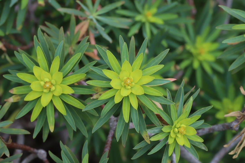 Euphorbias Hashtag On Twitter