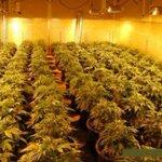 Image for the Tweet beginning: #marijuana #cannabis #cannabiscommunity-  CALAVERAS COUNTY (CBS13)