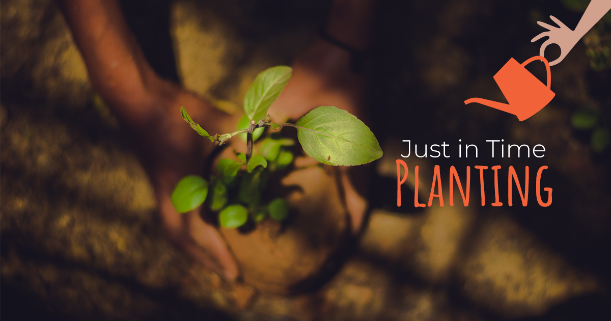 Plant only what you need, when the season and weather is right, instead of planting everything at once. This lets you keep up with what's in season without getting overwhelmed by too much of a good thing.   #life #love #homesweethome #home #family #garden #flowers #ideas
